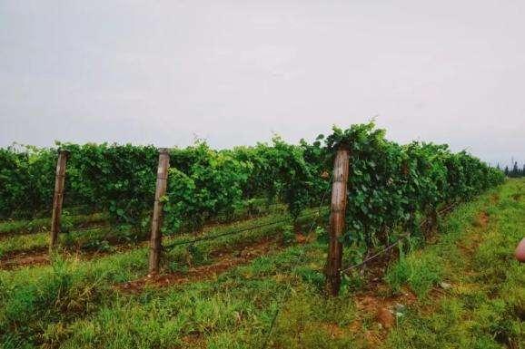2020中国·怀来国际葡萄酒博览会日前举行