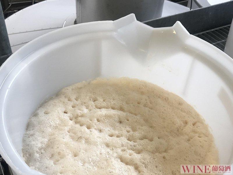 野生酵母发酵的利与弊