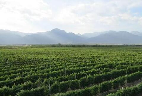 2025年宁夏葡萄酒产业综合产值将达到1000亿元