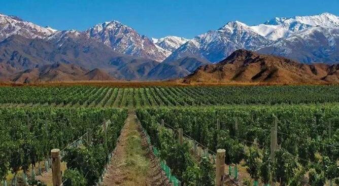 人民币升值叠加澳洲酒受反倾销,智利阿根廷进口酒释放利好信号!| 微酿观察