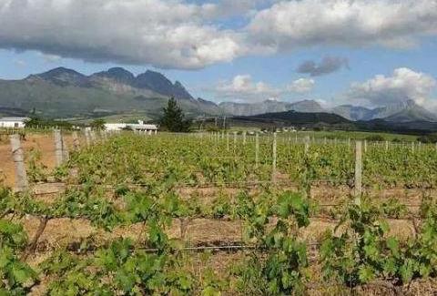 新冠肺炎疫情导致南非葡萄酒行业亏损75亿兰特