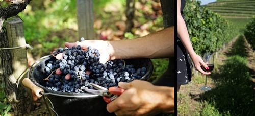 波尔多干红葡萄酒:不止于经典,现代风格的葡萄酒开启惊喜不断的精彩年份