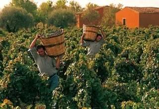 葡萄酒该如何与水果搭配