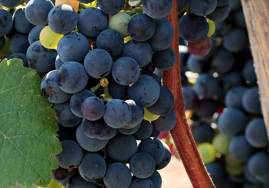 混酿葡萄酒中的明星品种