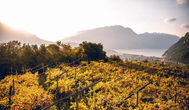 意大利特伦蒂诺大区提名为年度葡萄酒产区