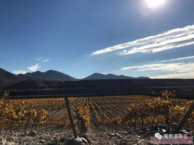 在世界极旱的沙漠里种葡萄,这个酒庄究竟想干什么?