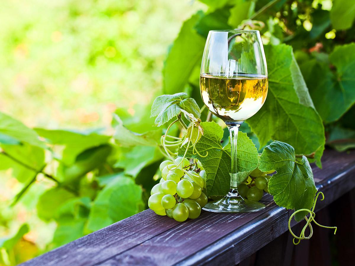 绿酒产区的葡萄酒