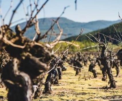 南澳葡萄酒业遭受新冠疫情重挫