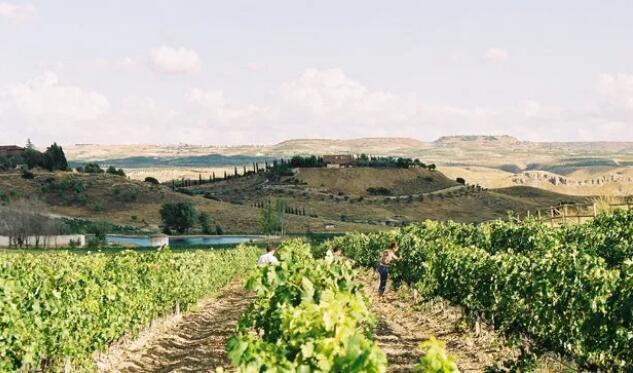 马德里法定产区加入西班牙葡萄酒之路认证
