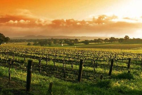蓬莱产区葡萄酒企业获得企业研究开发财政补助资金