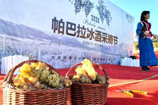 2020帕巴拉冰酒采摘节日前举行