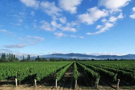 2020年1-11月中国葡萄酒进口量达2.3万千升