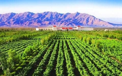 宁夏葡萄酒产业努力实现综合产值1000亿元