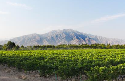 宁夏发布《葡萄酒产业高质量发展实施方案》