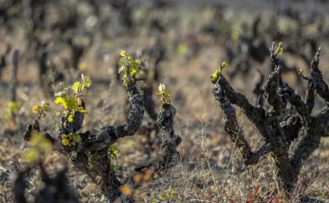 法国政府资金补助葡萄酒企业,应对美国加征关税