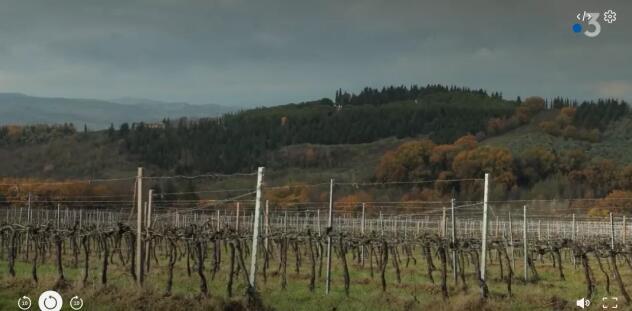 2020年意大利葡萄酒交易量下降15.2%,出口额暴跌