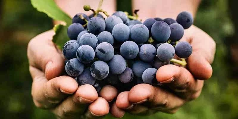 葡萄酒与沙律的搭配有哪些讲究?