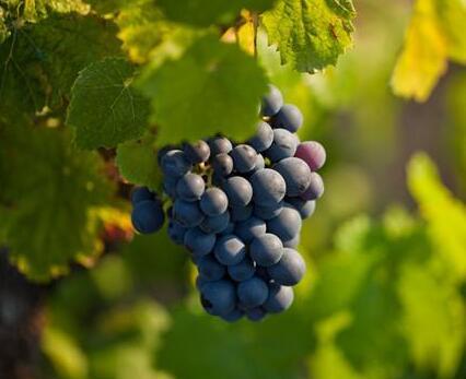 葡萄牙葡萄酒协会公布2021年中国市场计划