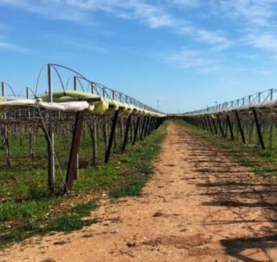 澳洲昆州葡萄酒行业损失了180亿澳元