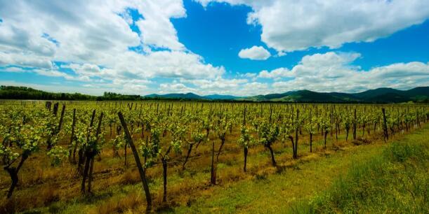 最新意大利葡萄园土地价格市场调查报告出炉