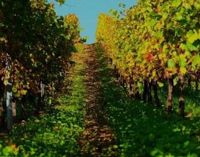 2021年意大利葡萄酒要绝地反击了?