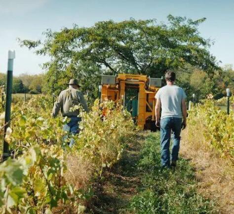 南非葡萄酒机构Vinpro就葡萄酒禁令发布公开信