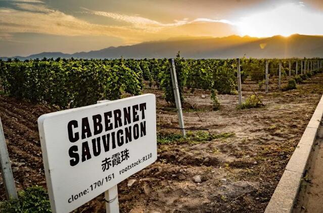 为转战其他市场,澳洲葡萄酒或迎来降价