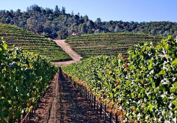 前作品一号员工加入加州葡萄酒商Patrimony
