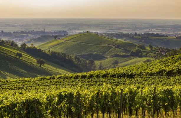 意大利八家最佳葡萄园名单新鲜出炉