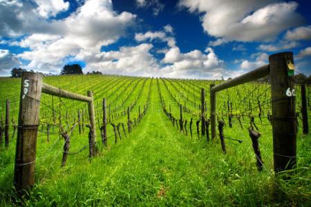 恒泰裕400万澳元出售澳洲克里夫兰酒庄物业