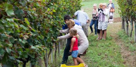 意大利酒庄游计划将在今年夏季面向全国招揽游客