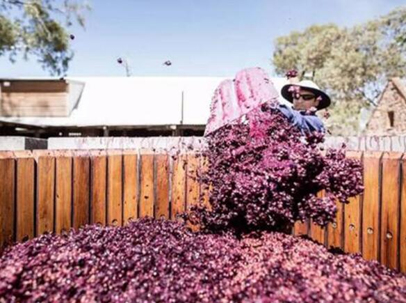 中澳贸易战导致南非葡萄酒对华出口量飙升