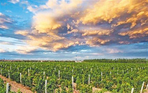 新疆昌吉州构建葡萄酒产业发展新格局