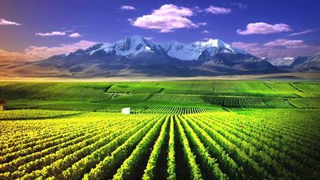 宁夏全区葡萄酒产业高质量发展第三次推进会日前召开
