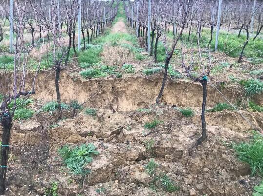 受连续降雨影响,波尔多吉伦特两处葡萄园发生滑坡