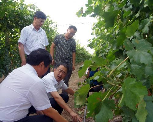 现海葡萄专业合作社到延庆区葡萄及葡萄酒产业促进中心观摩学习