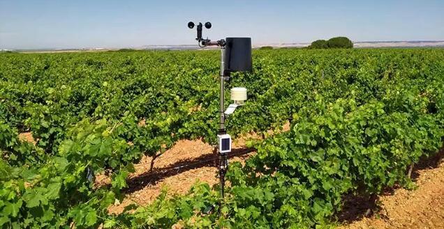 卢埃达法定产区转型智能农业化