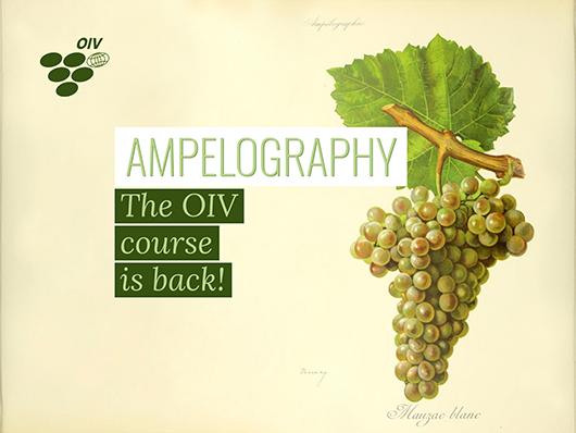 OIV重启葡萄品种学国际课程