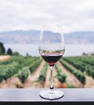 阿根廷葡萄酒销量有所增长,但葡萄园的日子不好过