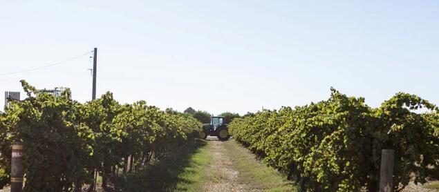 澳洲麦克威廉酒庄被卡拉布里亚家族酒业收购