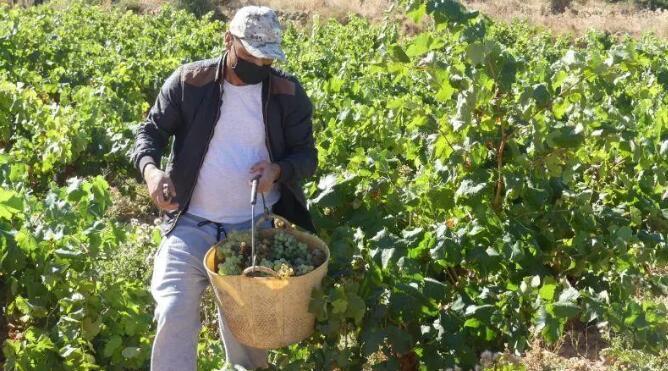 2020年卡利涅纳产区葡萄酒销售量数据出炉