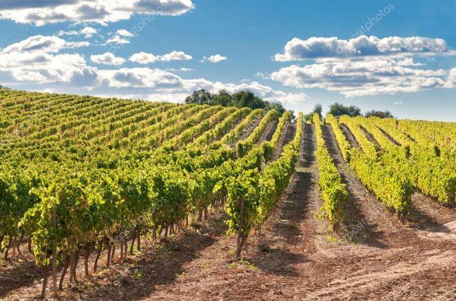 西班牙政府延长葡萄园种植授权有效期
