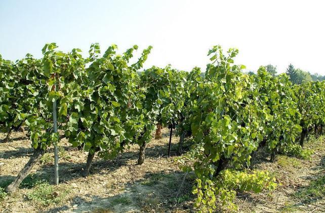 中国葡萄酒产业技术研究院项目已完成65%