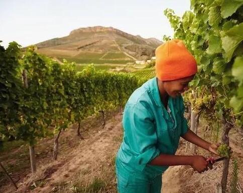 南非葡萄酒在中国市场迎来历史性机遇