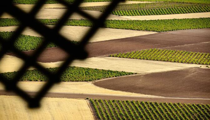 多个西班牙葡萄酒产区要求对拉曼恰葡萄产量进行限制