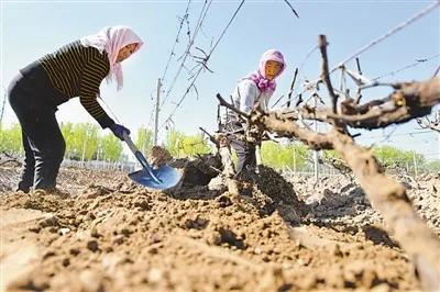 科技创新助推宁夏葡萄酒产业