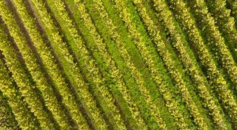 合作葡萄酒系统营业额保持稳定