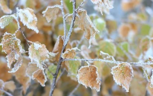 春季强烈霜冻导致法国葡萄酒行业损失20亿欧元