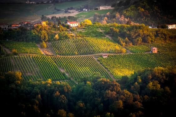 吉尔达·富加扎担任帕维亚波河流域葡萄酒产区协会新任主席