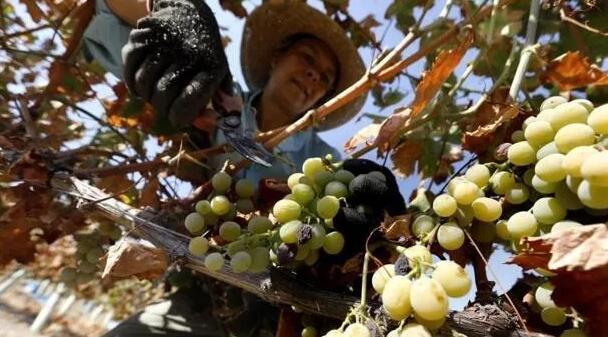 西班牙政府执行2亿欧元西班牙葡萄酒援助计划